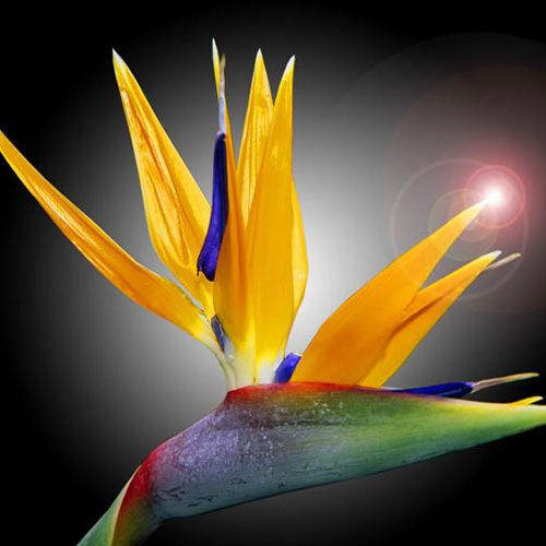 Hawaiian_flowers4