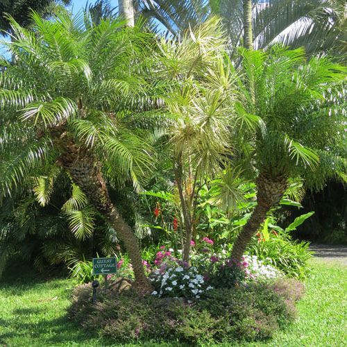 graden_plants1