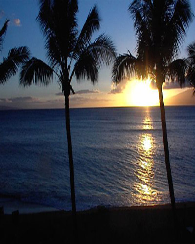 Palm trees at sunset. A perfect sunset for your Maui honeymoon at Hookipa Bay View